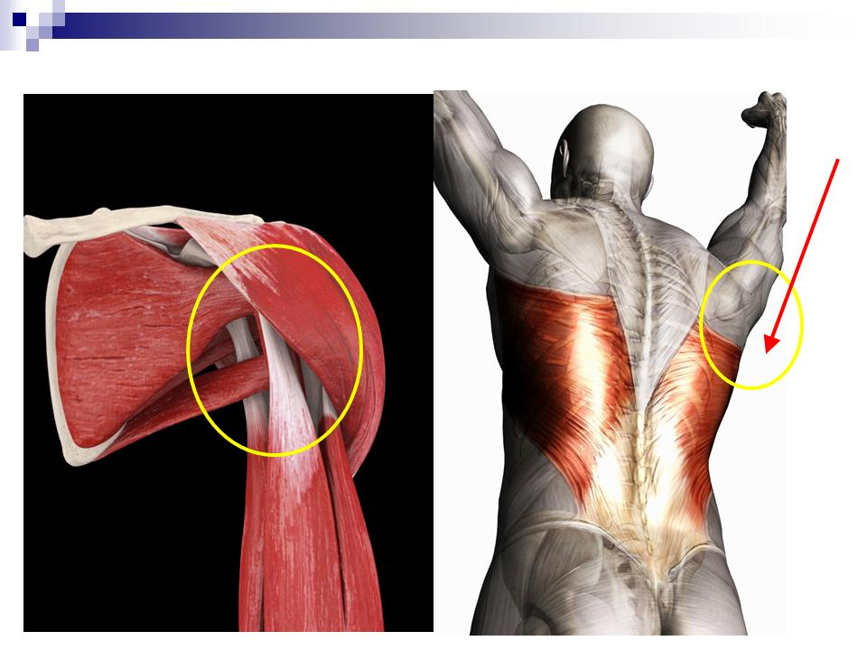 肩関節後下方の解剖
